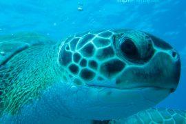 big turtle watching you