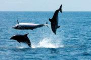 Delphins Jumps