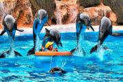 Delphins loro parque