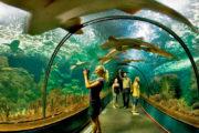 Loro parque tunel aquarium